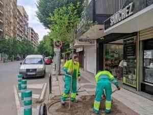 Por el Día del Medio Ambiente se plantaron 2 árboles en Avenida Primero de Mayo de Puertollano